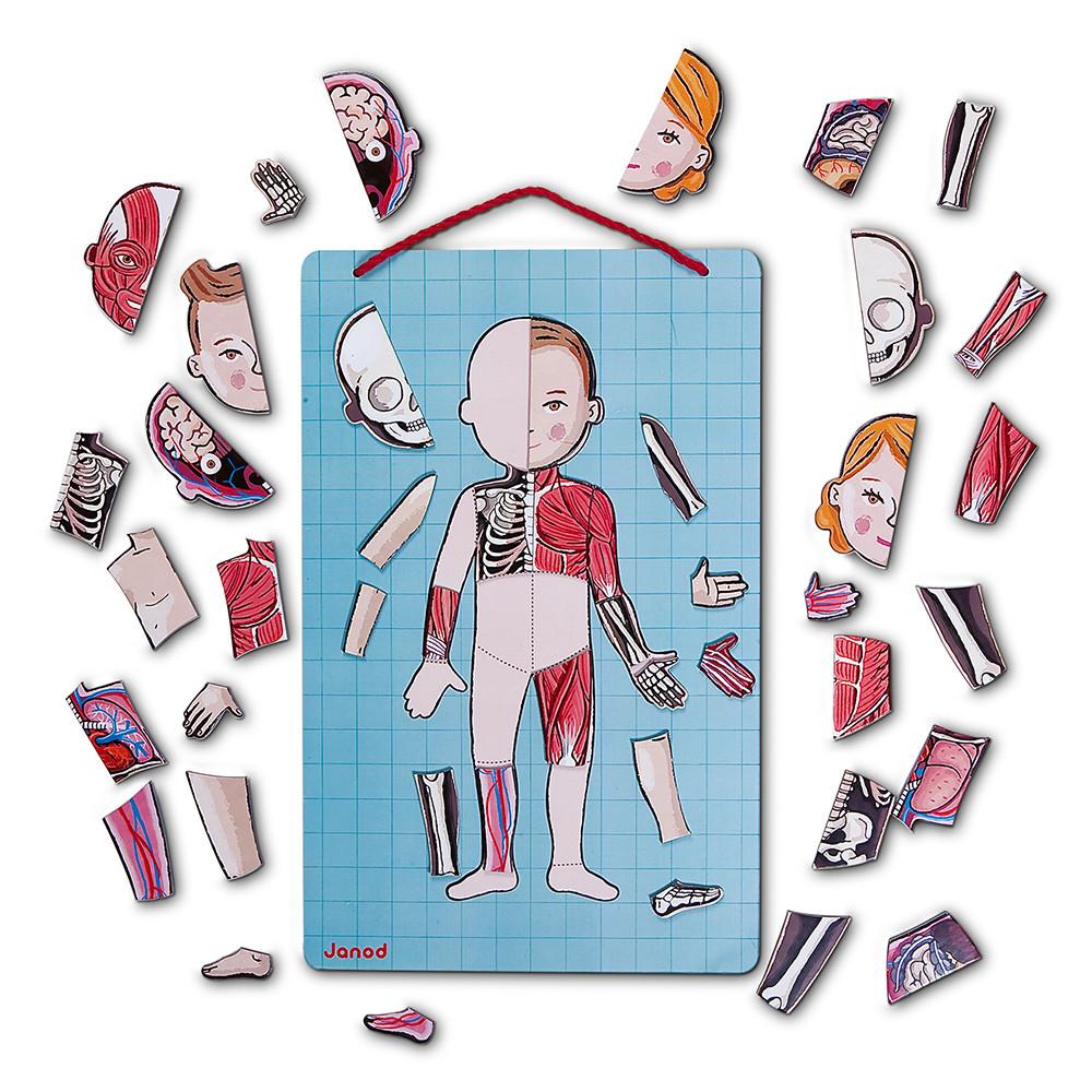 Janod Магнитна игра - Анатомия на човешкото тяло-bellamiestore